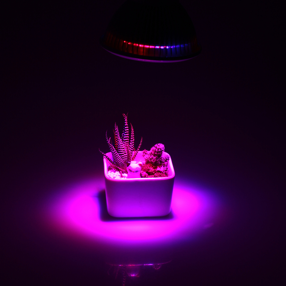 E27 12W Led Grow Light Red Blue LED Lights For Plants In